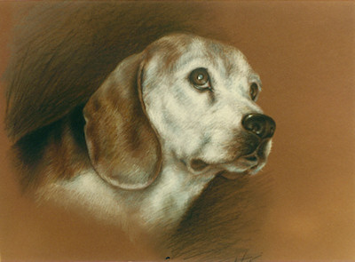 Lady - Sketched in memory of a Friend's Pet